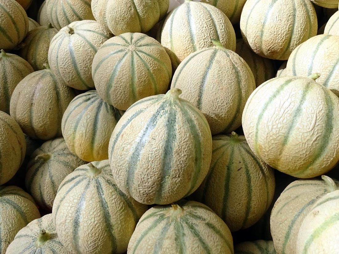 Sweet melons